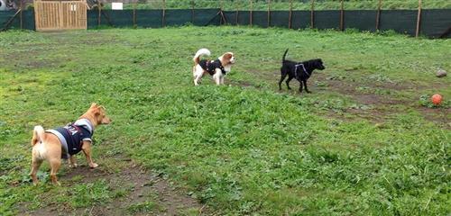 DOG SCHOOL Catania foto 6