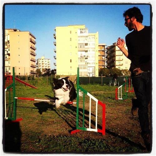 DOG SCHOOL Catania foto 2