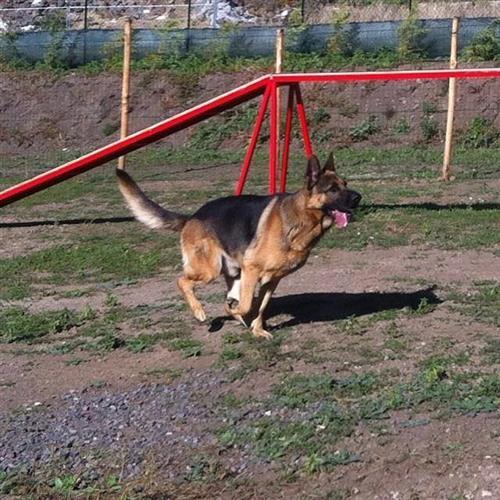DOG SCHOOL Catania foto 7