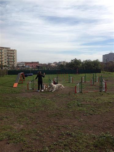 DOG SCHOOL Catania foto 11