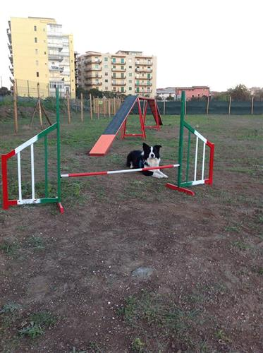 DOG SCHOOL Catania foto 12