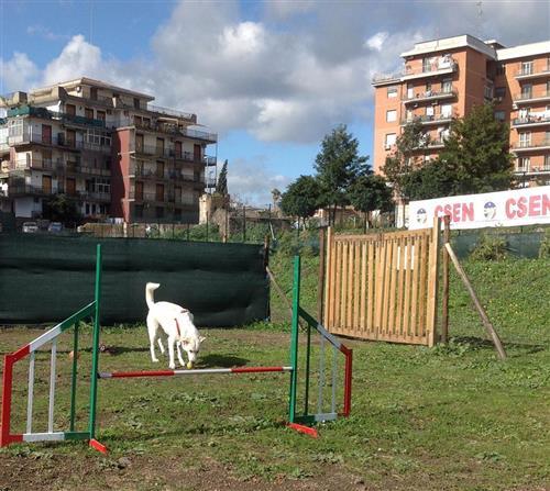 DOG SCHOOL Catania foto 13