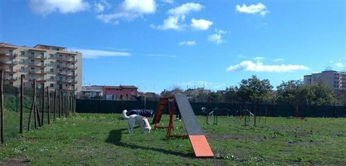 DOG SCHOOL Catania foto 14