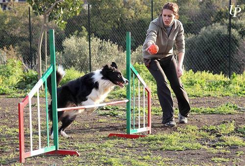 DOG SCHOOL Catania foto 15
