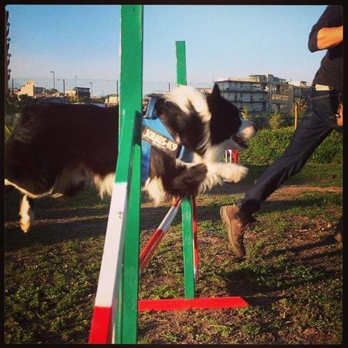DOG SCHOOL Catania foto 16