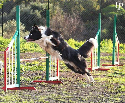 DOG SCHOOL Catania foto 17