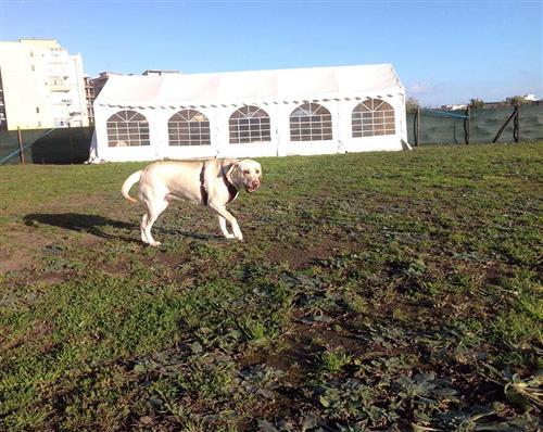 DOG SCHOOL Catania foto 19