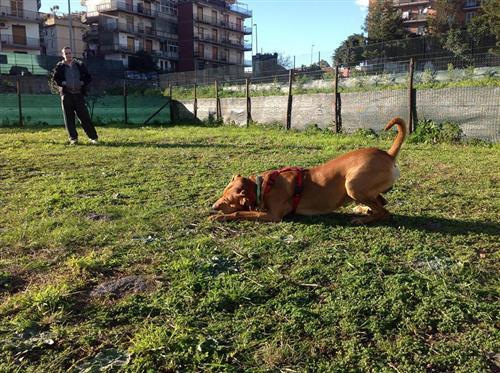 DOG SCHOOL Catania foto 21