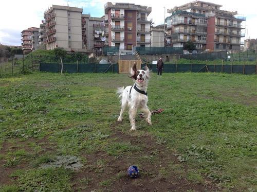 DOG SCHOOL Catania foto 22