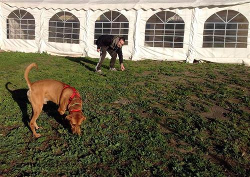 DOG SCHOOL Catania foto 26