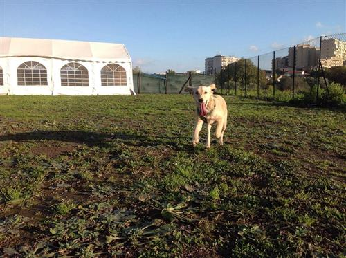 DOG SCHOOL Catania foto 27