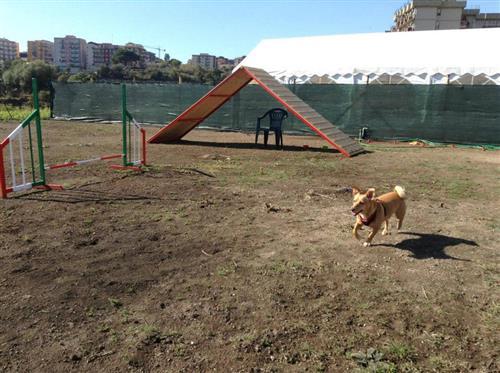 DOG SCHOOL Catania foto 3