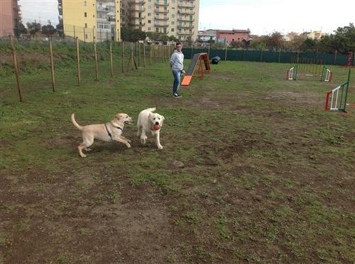 DOG SCHOOL Catania foto 4