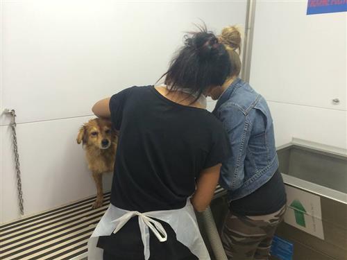 Wellness Dog Udine foto 261