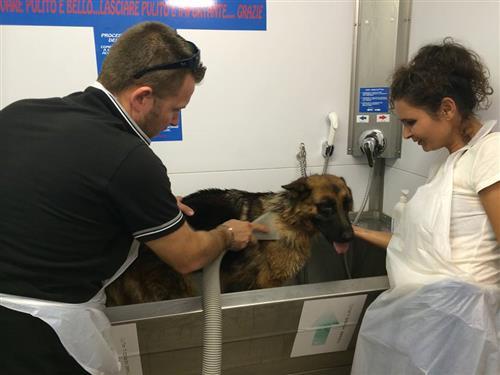 Wellness Dog Udine foto 263