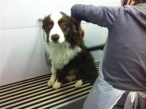 Wellness Dog Udine foto 50