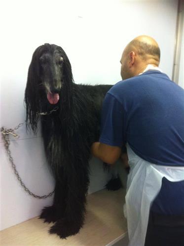 Wellness Dog Udine foto 143