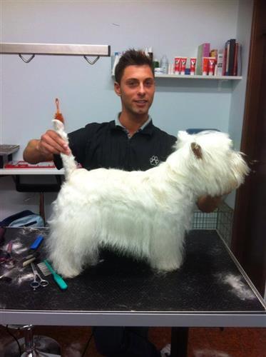 Wellness Dog Udine foto 124