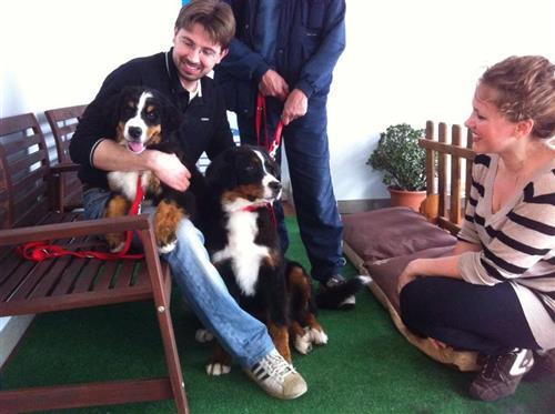 Wellness Dog Udine foto 9