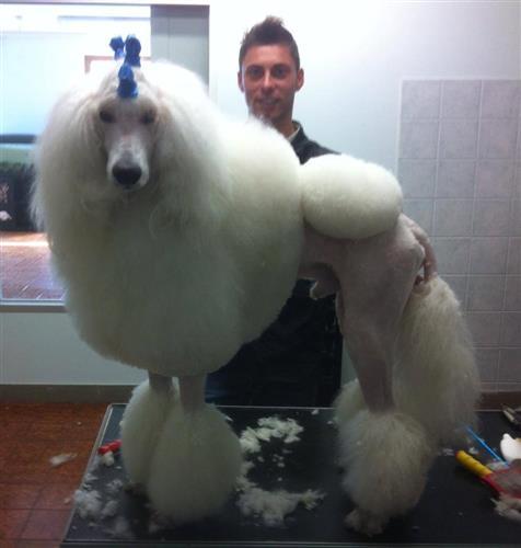 Wellness Dog Udine foto 11