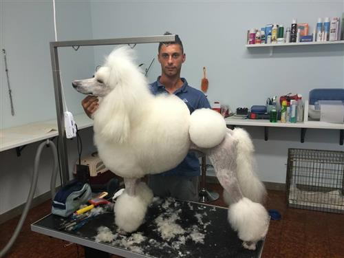 Wellness Dog Udine foto 233