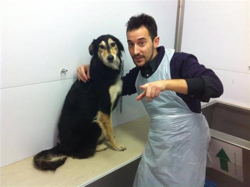Wellness Dog Udine foto 146