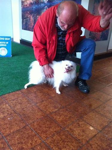 Wellness Dog Udine foto 1
