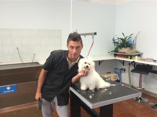Wellness Dog Udine foto 234