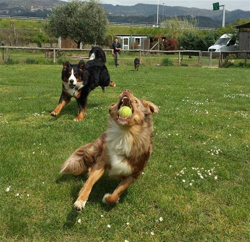 DOUBLE J FOR DOGS Vezzano Ligure foto 13