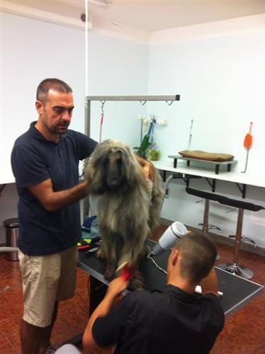 Wellness Dog Udine foto 128