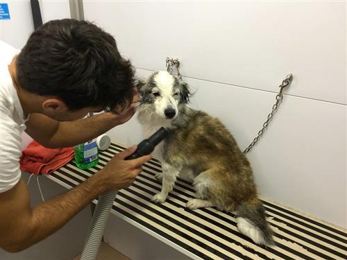 Wellness Dog Udine foto 268
