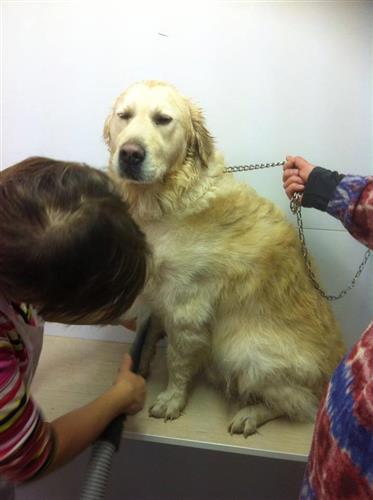 Wellness Dog Udine foto 157