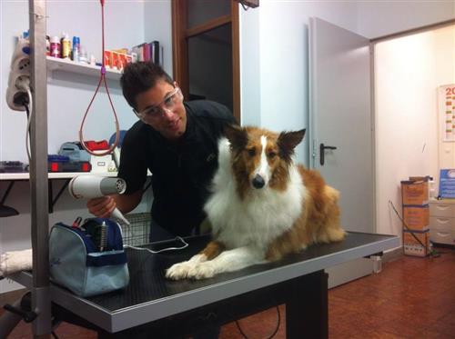 Wellness Dog Udine foto 66