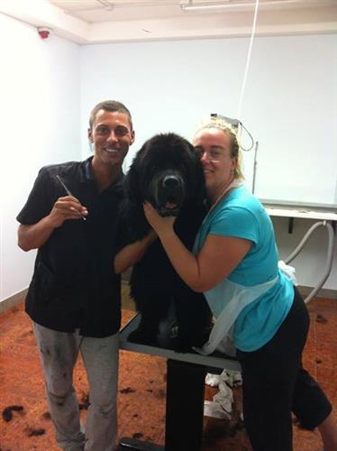 Wellness Dog Udine foto 131