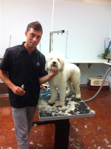Wellness Dog Udine foto 132