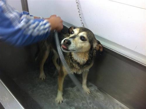 Wellness Dog Udine foto 71