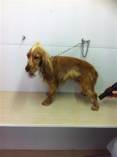 Wellness Dog Udine foto 167