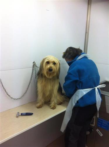 Wellness Dog Udine foto 168