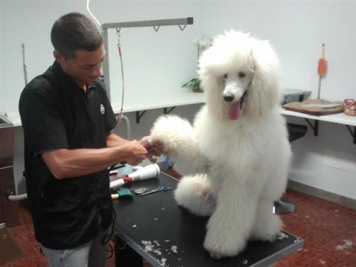 Wellness Dog Udine foto 134