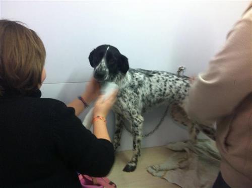 Wellness Dog Udine foto 171