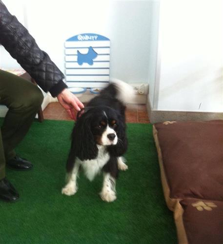 Wellness Dog Udine foto 25