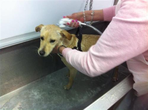 Wellness Dog Udine foto 26