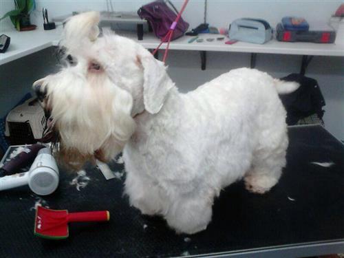 Wellness Dog Udine foto 174
