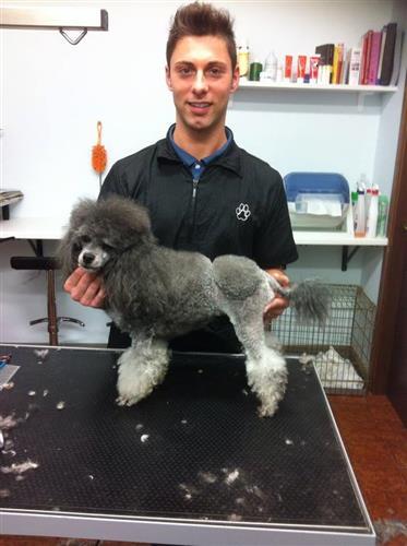 Wellness Dog Udine foto 76