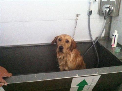 Wellness Dog Udine foto 175