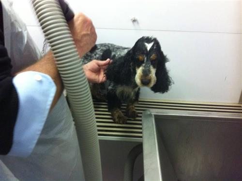 Wellness Dog Udine foto 200