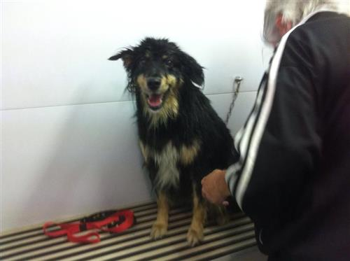 Wellness Dog Udine foto 80
