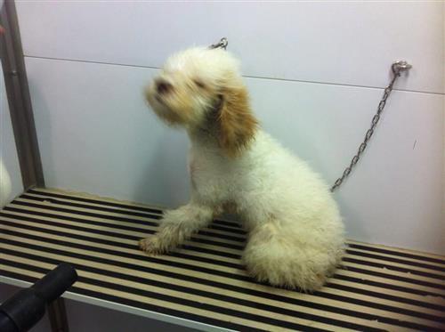 Wellness Dog Udine foto 2