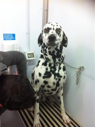 Wellness Dog Udine foto 32