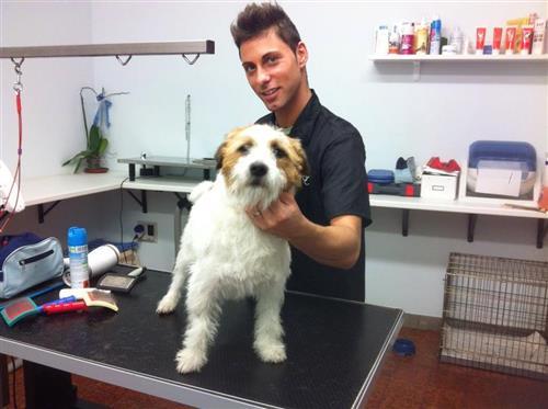 Wellness Dog Udine foto 81